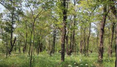 <b>石家庄植树的好地方-小壁防护林</b>