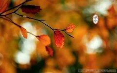 秋分的谚语、俗语和诗歌