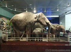 云南昆明动物博物馆官网介绍