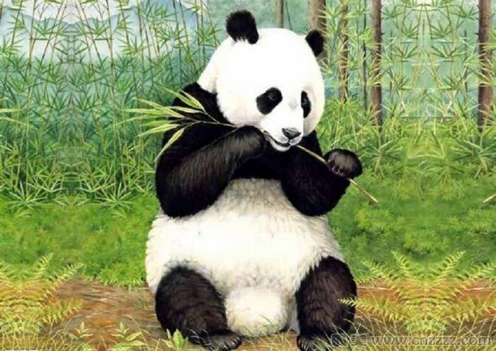 大熊猫为啥是中国的国宝?大熊猫为啥那么重要?